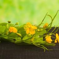 Удаление папилломы чистотелом: как правильно им пользоваться для достижения эффекта?