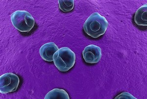 хламидии бактерии