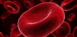 эритроциты во крови
