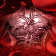 MID в анализе крови: что это такое, норма и отклонения