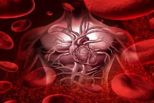 моноциты в крови