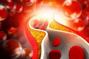Определение нужного количества моноцитов в крови у женщин